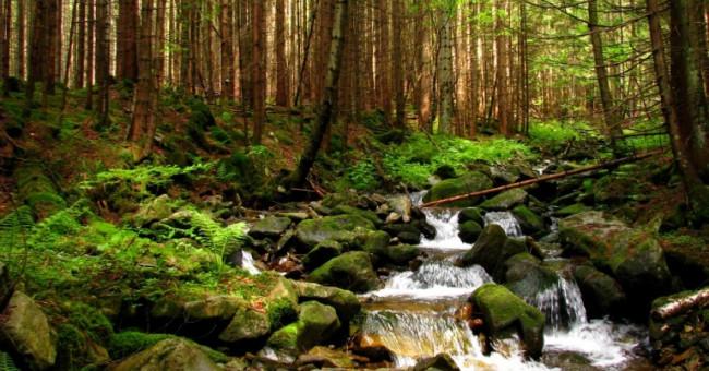 Поясковский лес