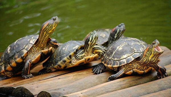 Зоотерапия 10 отелей: Tortuga Lodge & Gardens