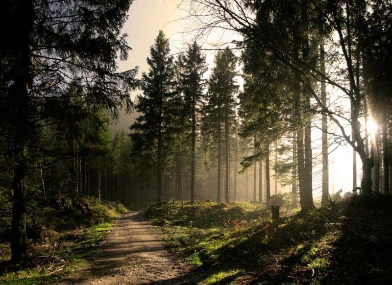 Места для медитаций в Украине Черный лес