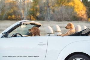 Названы 40 финалистов конкурса Comedy Pet Photo Awards